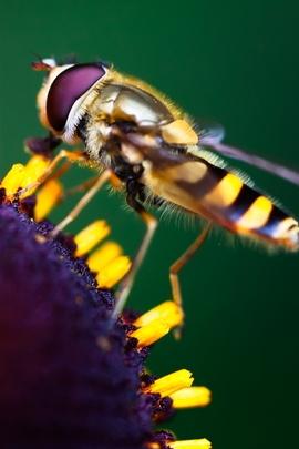 Trabalhando duro abelha