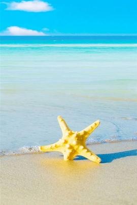 Sea Beach Starfish