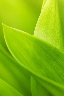 Cyan Leaf Macro I