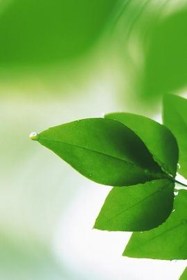 Folha de planta verde