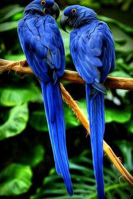 Paradise Perroquets