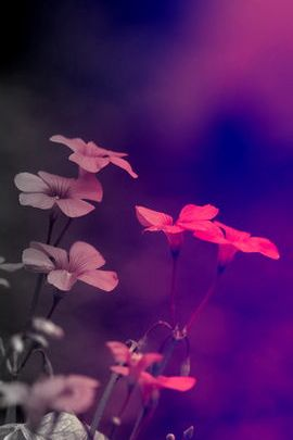 Captivating Flowers