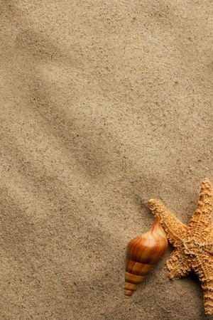 在海滩沙子的蜗牛
