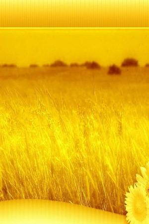 Amazing Yellow Field