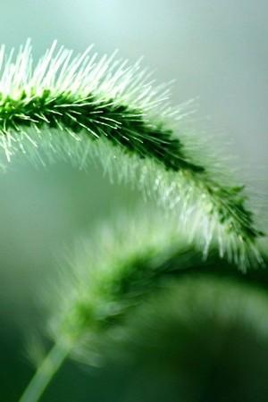 Skinny Green Plants
