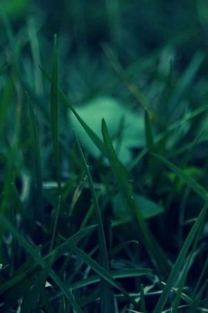 Rumput Hijau Mikro