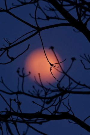Orange Moon Night