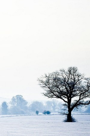 Single Winter Tree