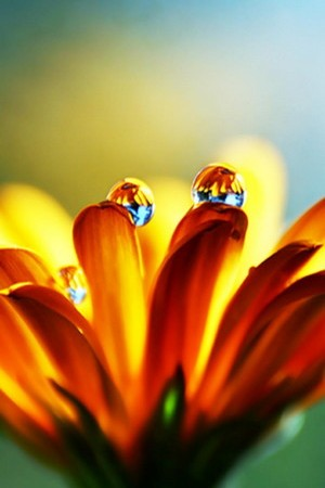 Orange Flower Watery