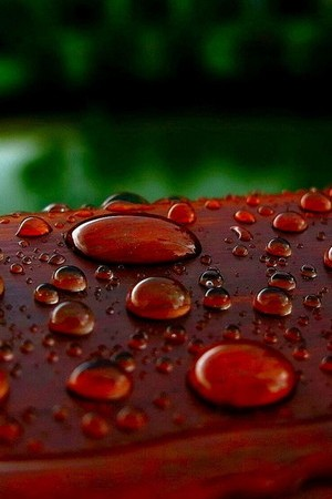 Watery Wood