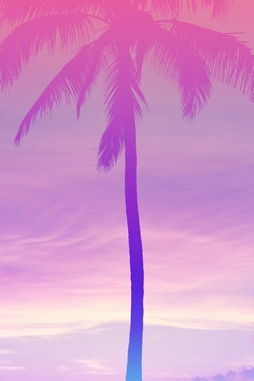 Beautiful Coconut Tree