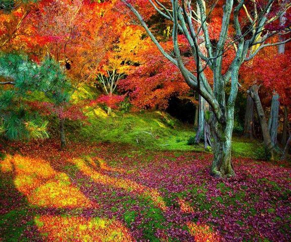 Bilder herbst kostenlos whatsapp ᐅ Herbst
