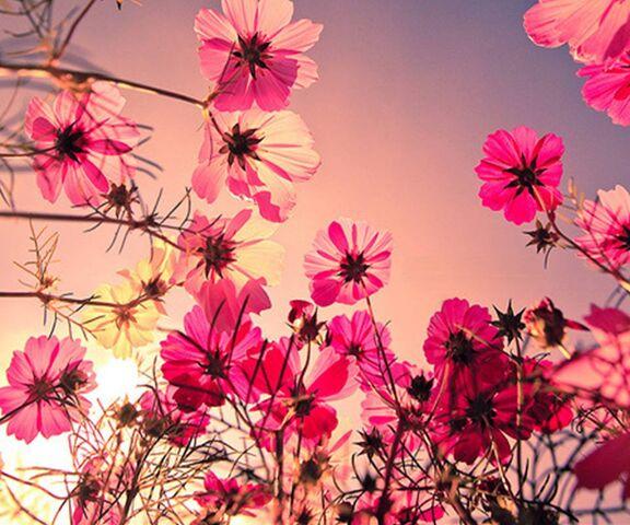 Belles Fleurs Fond D Ecran Telecharger Sur Votre Mobile Depuis Phoneky