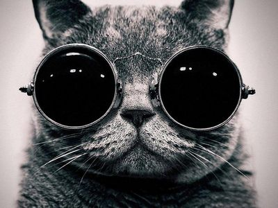 Zabawny Czarny Kot Tapeta Pobierz Na Telefon Z Phoneky