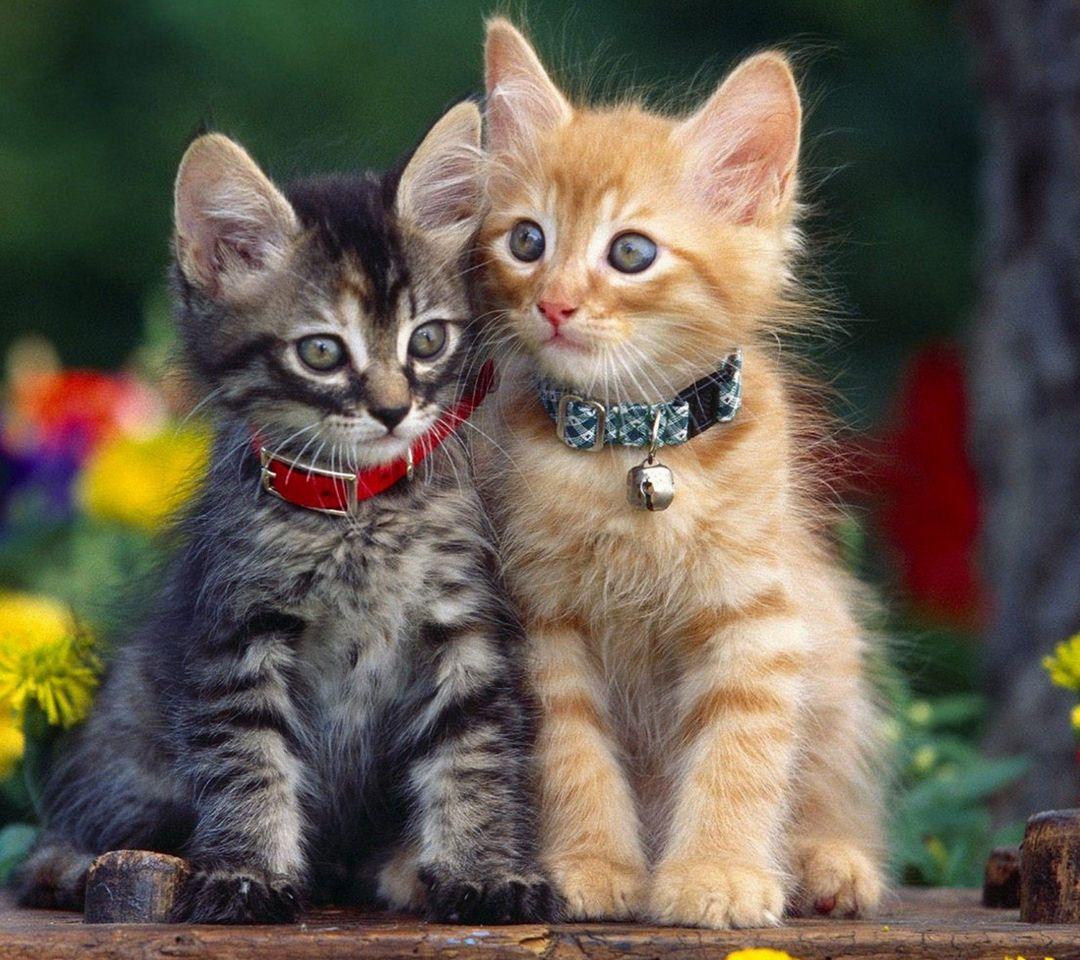 Kucing Comel Hd Kucingcomel Com