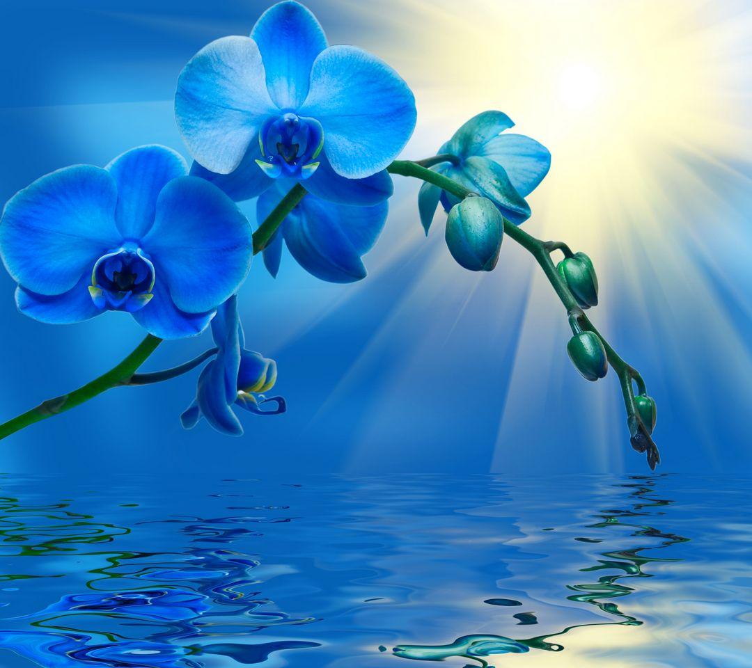 Bunga Cantik 1 Wallpaper Download Ke Ponsel Anda Dari Phoneky