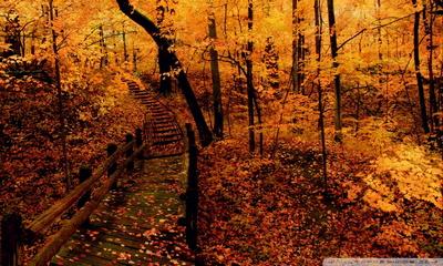 foto de Forêt jaune Fond d'écran - Télécharger sur votre mobile depuis PHONEKY
