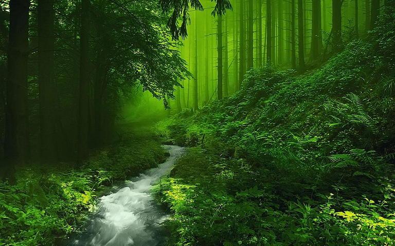 Gruner Wald Hintergrund Lade Auf Dein Handy Von Phoneky Herunter