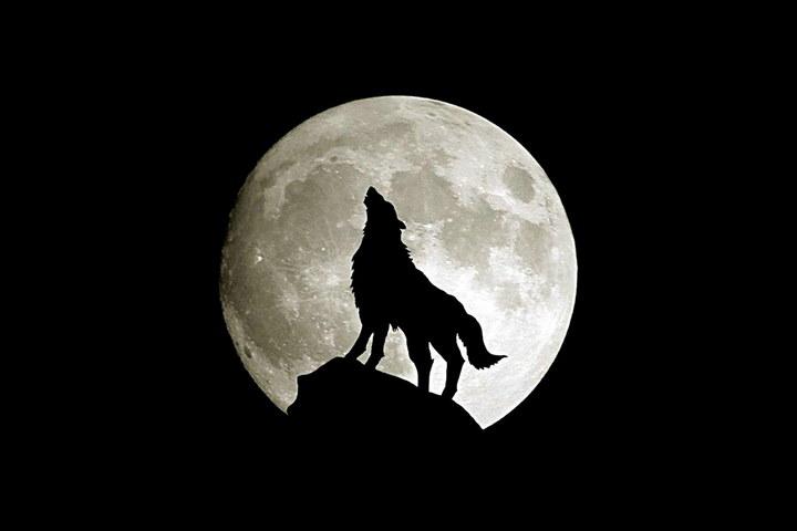 Lupo e luna Sfondo - Scarica sul tuo cellulare da PHONEKY