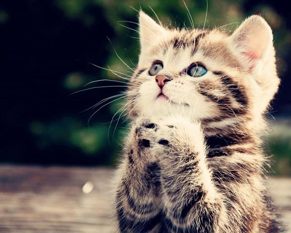 Comel Wallpaper Kucing Cute Majalah Cat Dog