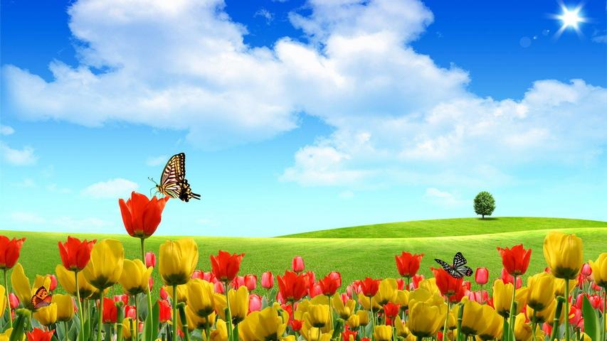 Farfalle Di Nuvole Di Sole Albero Cielo Campo Di Tulipani Sfondo