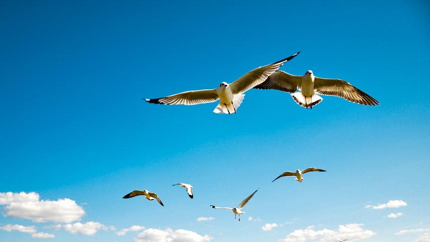 นกบิน Albatross ปีก Sky Flying