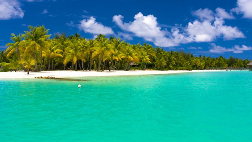 Summer Maldives Tropical Beach Palm Trees
