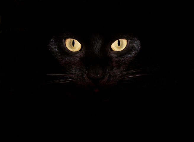 Gatto Nero Sfondo Scarica Sul Tuo Cellulare Da Phoneky