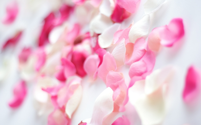 Bunga Anggrek Merah Muda Wallpaper