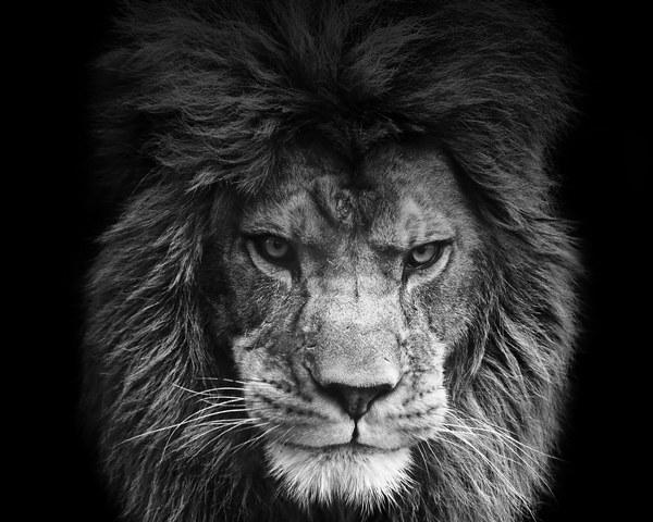 Huyền thoại Lion