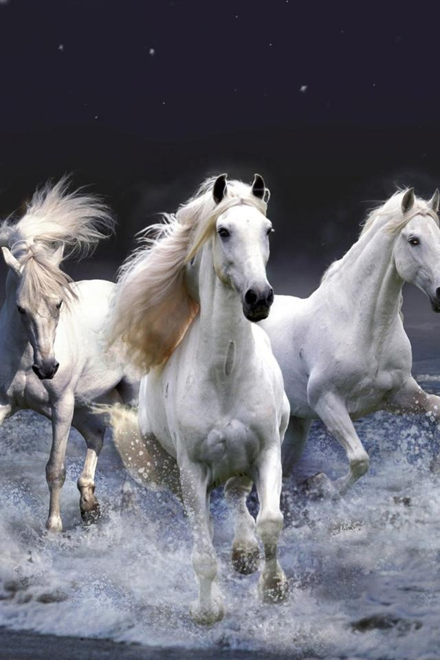 Cavalli Sfondo Scarica Sul Tuo Cellulare Da Phoneky