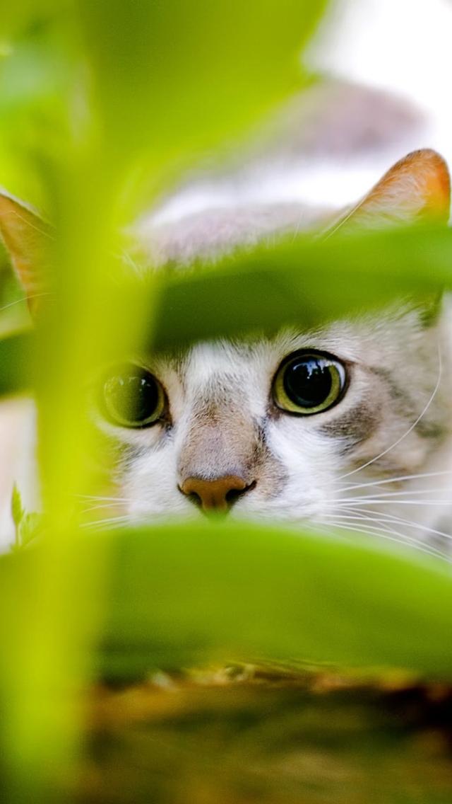 Kucing 1 Wallpaper Download Ke Ponsel Anda Dari Phoneky