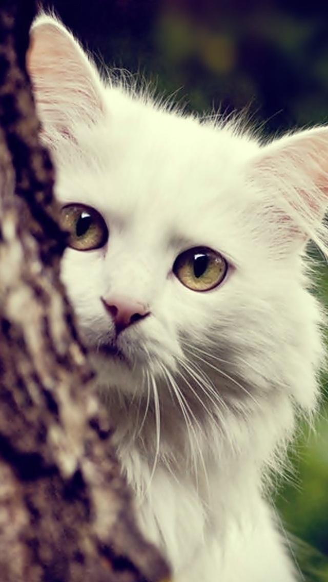 Kucing Putih Wallpaper Download Ke Ponsel Anda Dari Phoneky