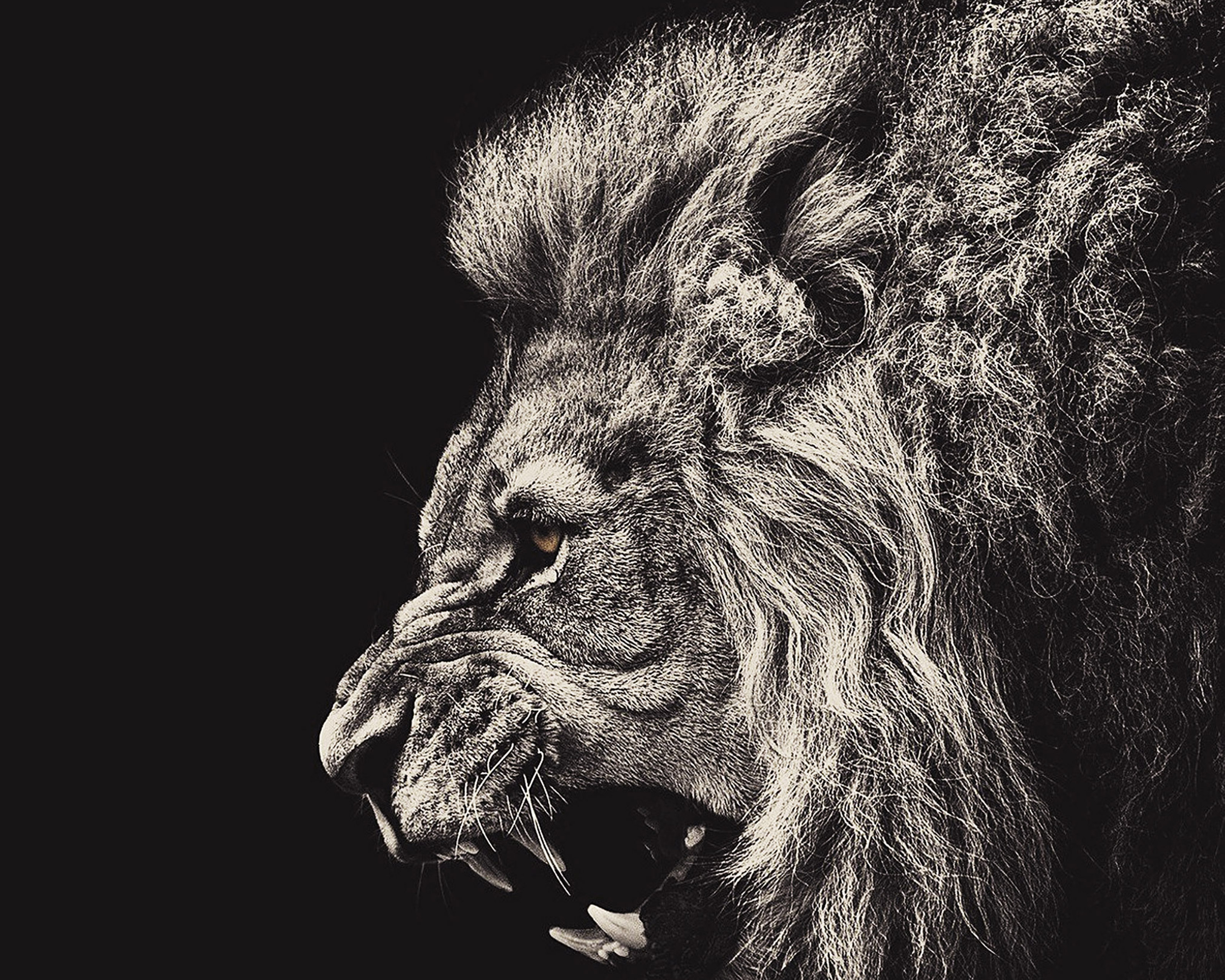 Download Lion Roaring Hd Wallpaper For Desktop Mobile: Download To Your Mobile From PHONEKY