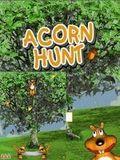 Acorn Hunt