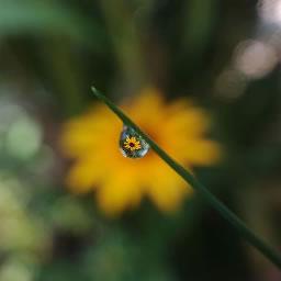 Waterdrop Drop
