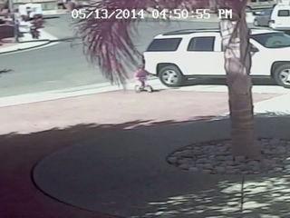 gato salva a un niño del ataque de un perro