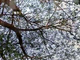 Saali Khushi - Short Film