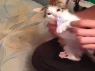 Cute little pussycats