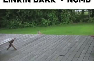 Linkin' Park - In The End (Dog Version)