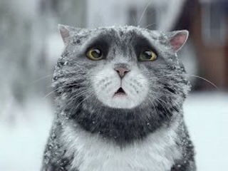 Sainsbury's Christmas Advert 2015 - Mog's Christmas Calamity