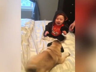 Funny Dogs + Cute Babies = Perfect!