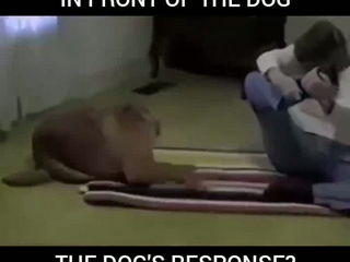 Watch this dog do better Yoga than humans