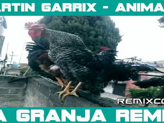 Best Martin Garrix Remix