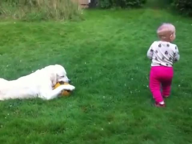 Funny Babies Talking to Dogs
