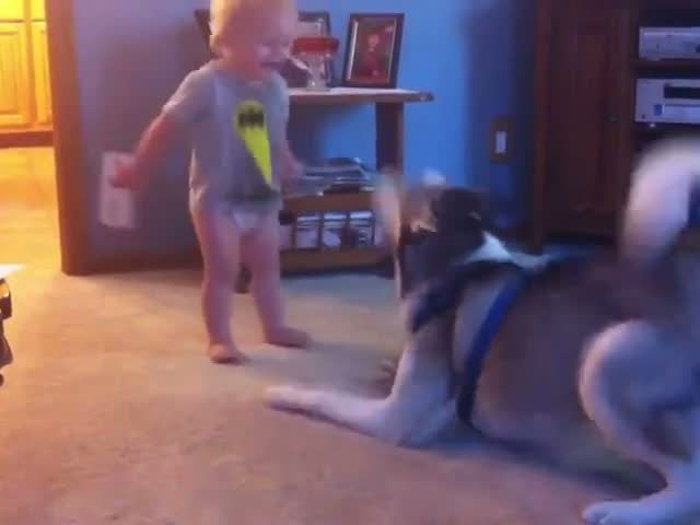 Baby and Husky have deep conversation