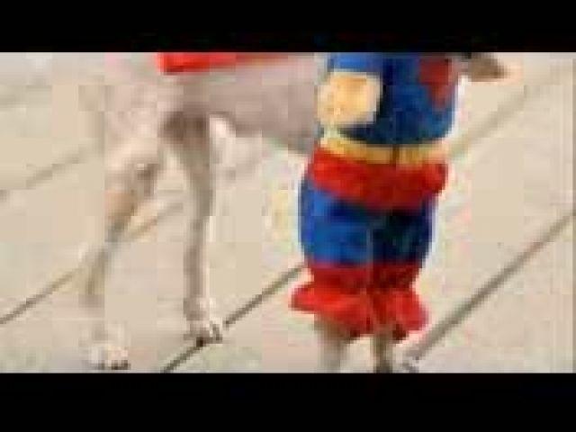 Cool dog halloween costume ideas