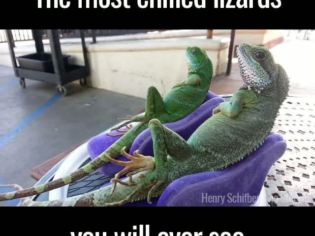 These are the coolest lizards ever