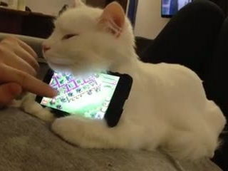Sleepy kitten makes excellent phone stand