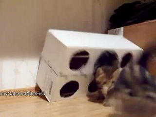Funny Cats - Kittens and a Box ( homemade free toy )